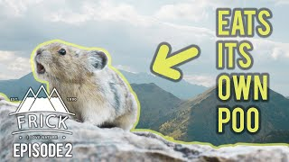 Amazing Animals in the Rocky Mountains - Mountain Goats, Lichen and Pikas