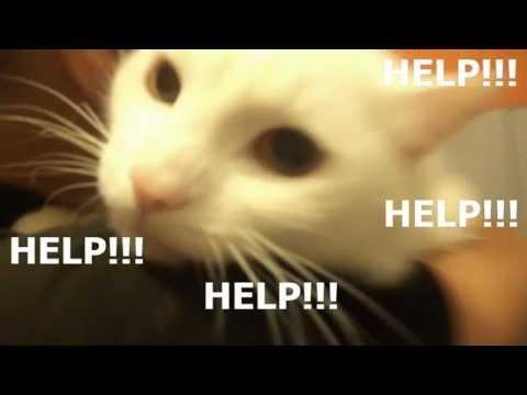 Как постирать кота?