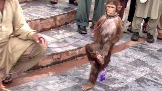Akshay Kumar Ki Tarah Karta Hai Saare Action Ye Bandar | Comedy Video From My Phone