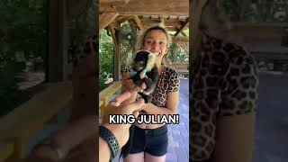 MORT JUST WANTS TO SEE KING JULIAN...