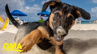 Take a potcake to the beach or adopt a pup at this animal rescue in paradise | GMA Digital