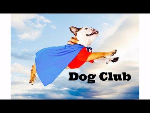 Dog Club - Children's Bedtime Story/Meditation