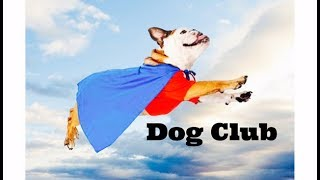 Dog Club - Children's Bedtime Story/Meditation