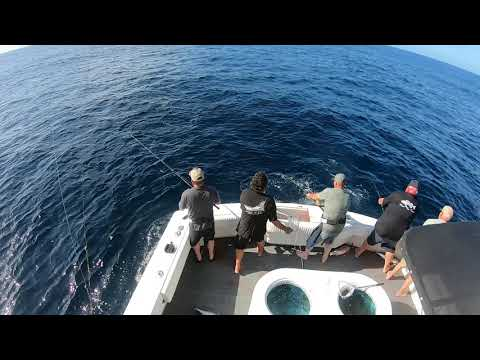 Limits Of Yellowfin Tuna And Skipjack Fishing San Diego 2019