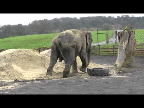 Anne the elephant says goodbye to the circus