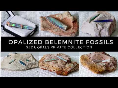 What are Opalized Belemnite Fossils?