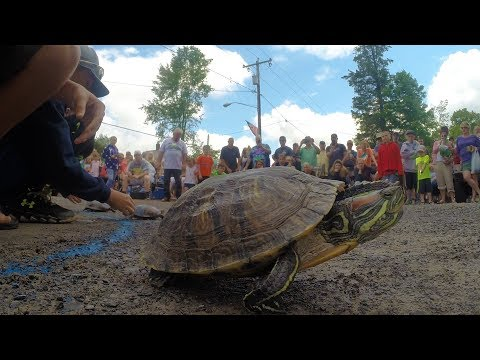 Off like a herd of turtles: quirky race immortalized Osceola (video)