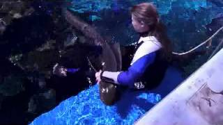 Reef HQ Aquarium Leopard Shark recieving a scratch Thumbnail