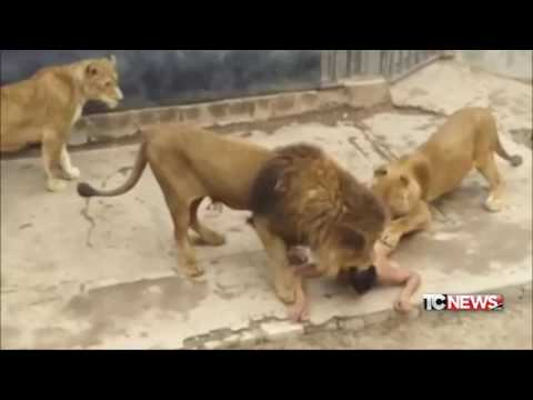 IL FATTO di Luca Curatti - nudo nella gabbia dei leoni - 31.05.2016
