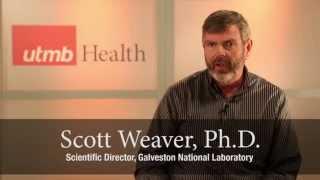 Chikungunya in the U.S.: UTMB's Dr. Scott Weaver