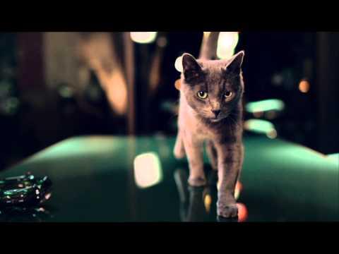 Видео Корм для кошек прохвост донецк