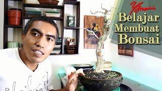 Pruning, Wiring dan Styling Bonsai Kawista (Feronia lucida) #05