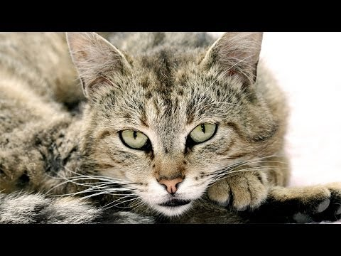 Just Pictures Of Cats (=TェT=) For 10 Hours