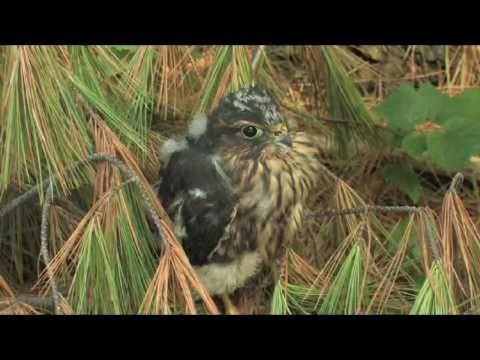 Birds of North America Vol1 2010