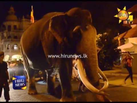 Nadungamuwa Raja arrives in Kandy