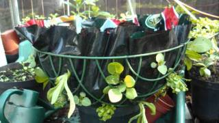 How To Plant A Hanging Basket.