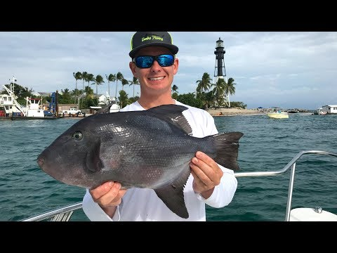 Fish With LEATHER Skin... Catch Clean Cook -Ocean Tally (Triggerfish Ceviche)