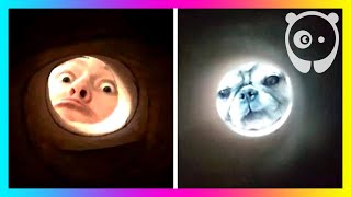 Selfies Taken Through A Toilet Roll Tube That Make People Look Like The Moon | Bored Panda Listicles