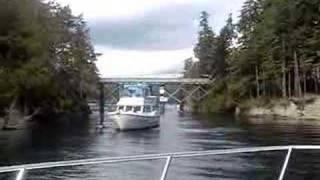 Shark Flips Over Captain's Boat