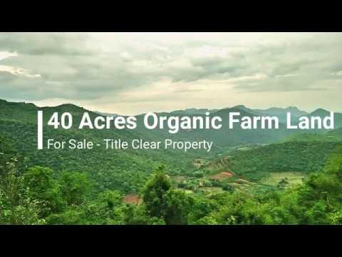 40 Acres Organic Farm Land for Sale - Salem District Property