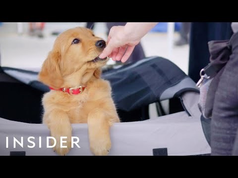 How Dogs Are Trained For TV And Movies  Movies Insider