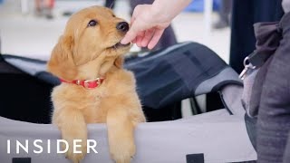 How Dogs Are Trained For TV And Movies | Movies Insider