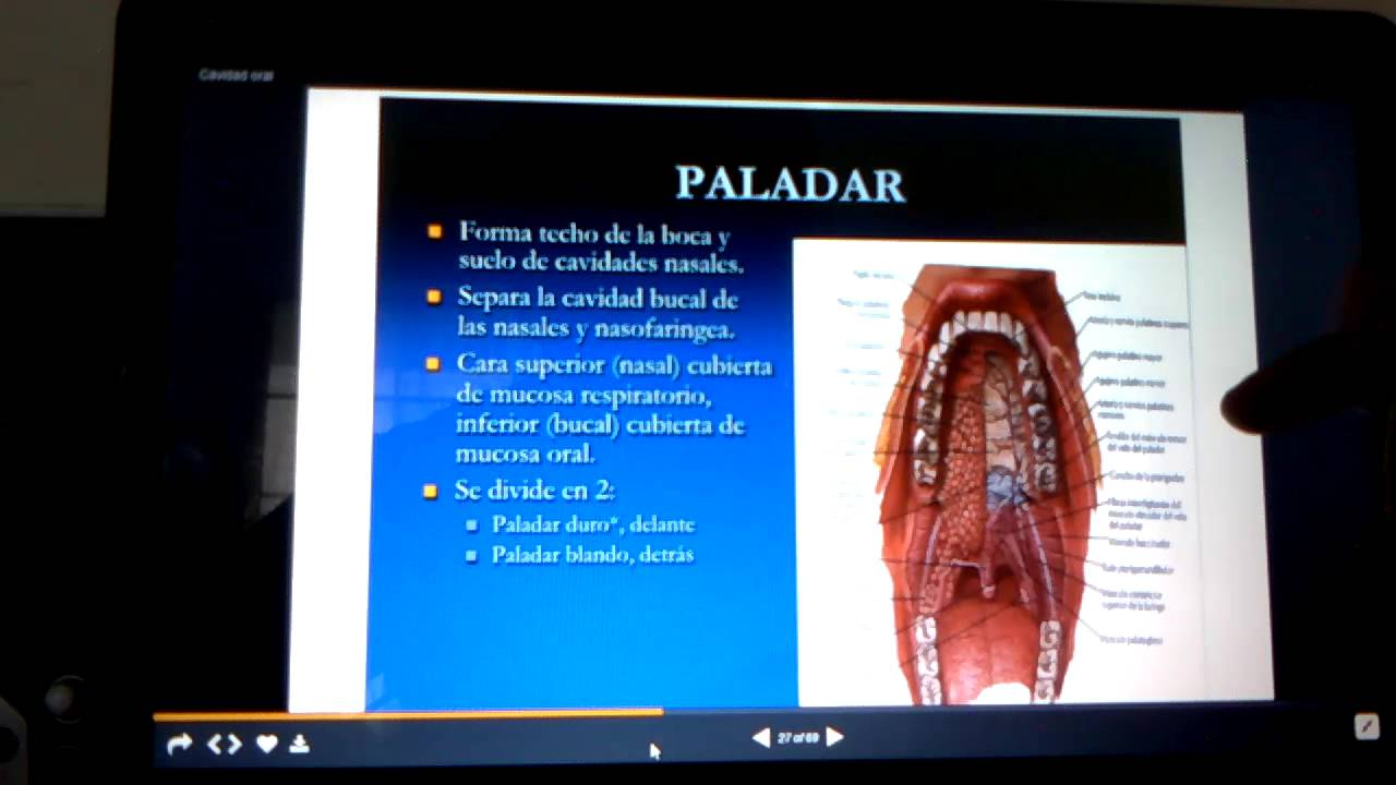 Vídeo de anatomía de boca TF13 Equipo 5 - YouTube
