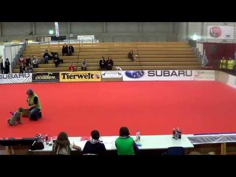 11. Intern. Dog Dance Turnier Winterthur 2014