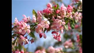 Прикосновение Весны..... Прикосновение Любви...