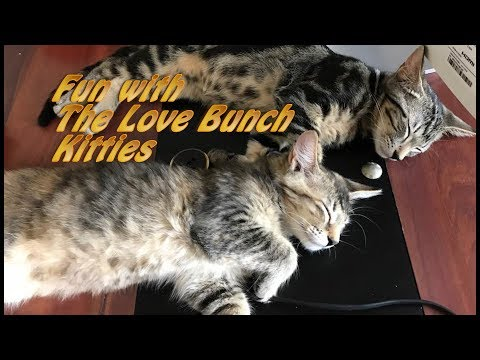 TWO KITTENS IN A BAG - CUTE KITTENS - PLAYTIME - MORE LOVE BUNCH KITTEN CRAZY FUN
