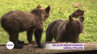 Halálos medvetámadás Székelyföldön