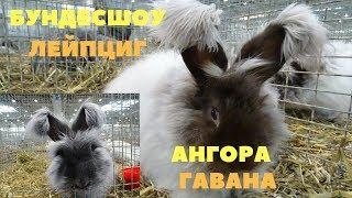 Ангорские кролики БУНДЕСШОУ Лейпциг