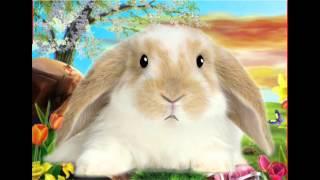 "Permanent Makeup ""Hare-Raising""Message Thumbnail"