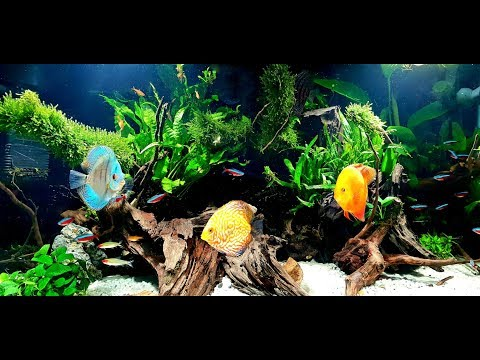 How To:  River Bank Aquascape (Amazon / Africa Style)