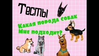 Тест | Какая порода собаки мне подходит?