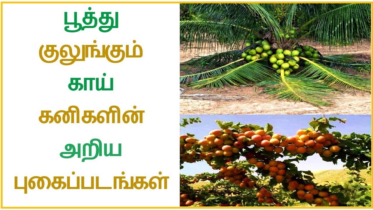 Learn photos of vegetables and fruit trees │Tamil Dear