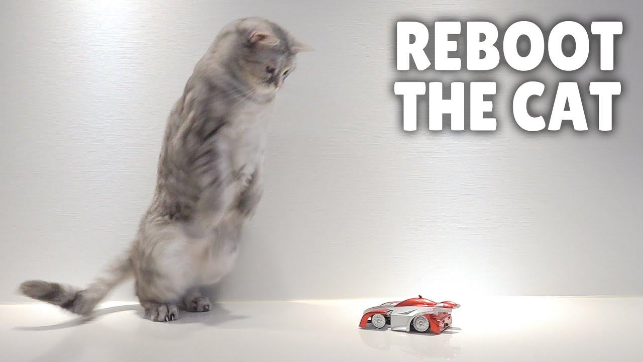 Cat.exe Has Stopped Working! | Kittisaurus