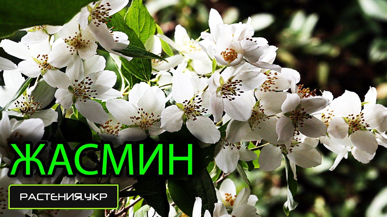 Украинский язык поздравления мужчине с днем рождения в прозе