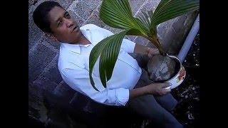 Como sembrar una palma de coco por el Pastor Edison Garcia