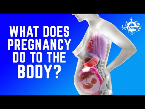 This Mind Blowing Animation Shows The Incredible Way A Woman S Organs Move During Pregnancy Youtube