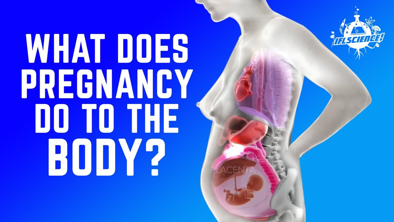 hight resolution of this horrifying animation shows you how a woman s organs move during pregnancy