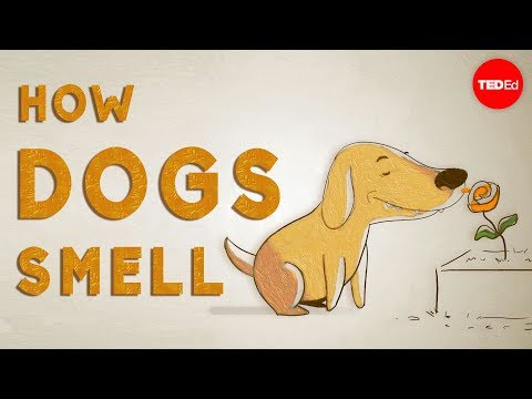 How do dogs 'see' with their noses? - Alexandra Horowitz