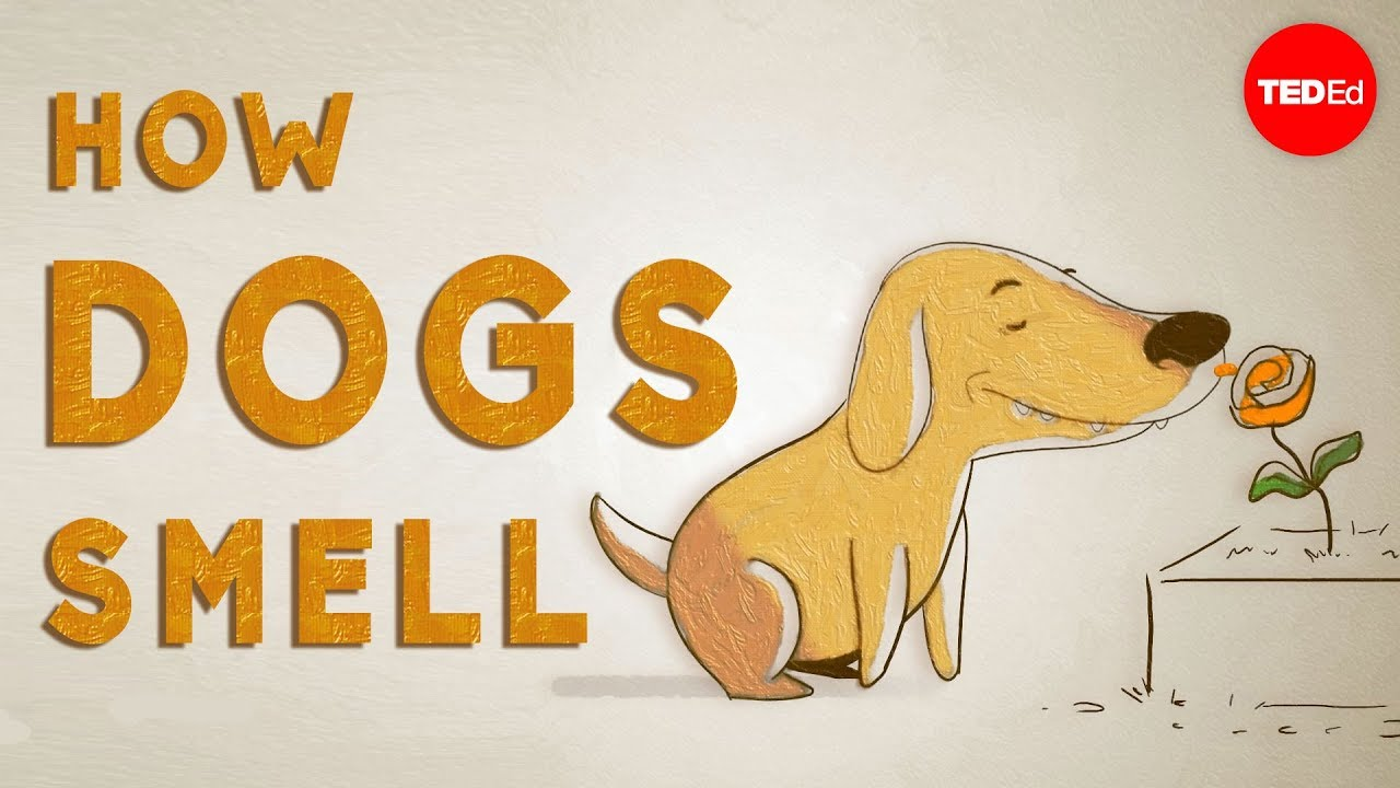 I Has A Hotdog Smelly Funny Dog Pictures Dog Memes Puppy