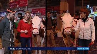 """Salon de l'agriculture - La battle des savoir-faire """"Comment manipuler une vache ?"""""""