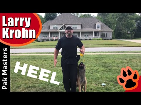 Proper hand position when teaching a competition style heel to puppies and young dogs