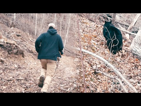 THREE BIG BEARS IN ONE DAY – Bear Hunting with Hounds