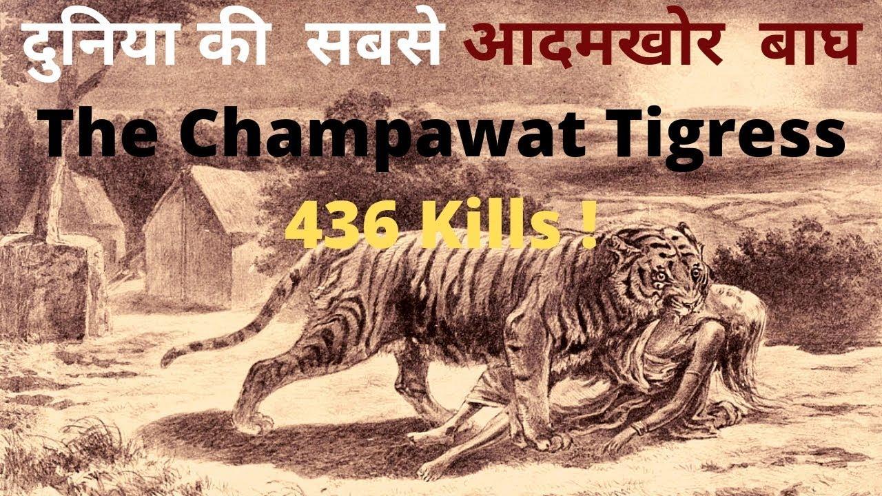 Deadliest Man eater in history | The Champawat Tigress |Jim Corbett |  Jungle Safari [Hindi]