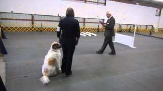 Fenwick - Graduate Novice 1st Leg Qualify; 13 Oct 2013; National Capital Kennel Club