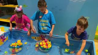 Catch Baby Shark Toys in Pool Games and fun