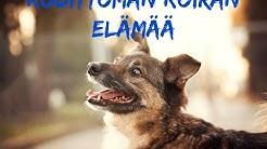 Kodittoman koiran elämää
